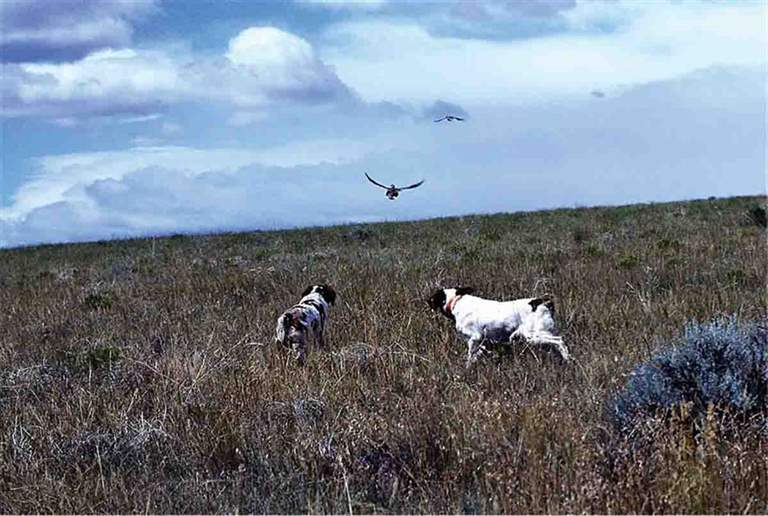 The North American Grouse Partnership works to insure the health of not only the various grouse species but also the habitats that serve as homes to them. (Photo/NAGP)