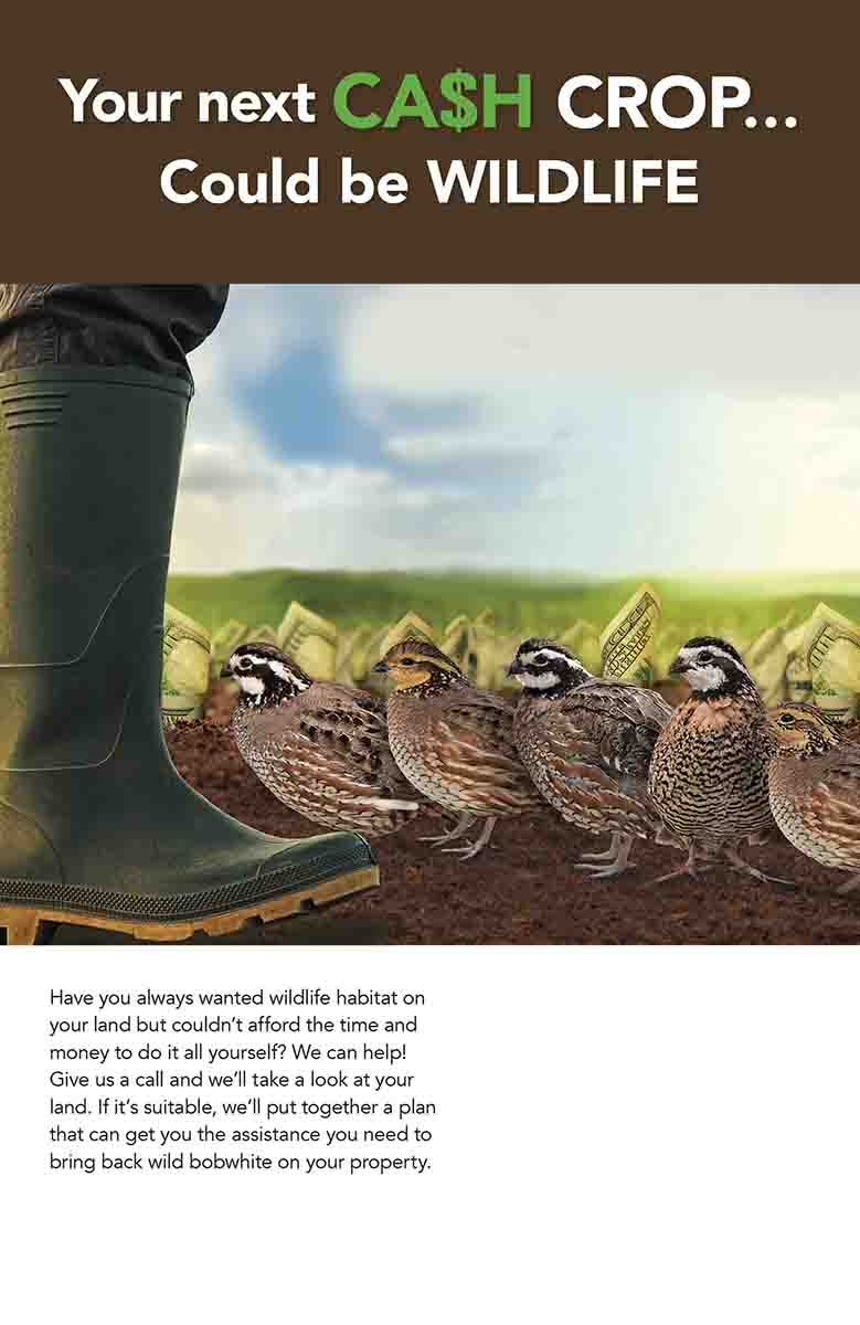 The National Bobwhite Conservation Initiative is working on a marketing campaign designed to allow states to engage private landowners about habitat creation. The plan can be customized for various land uses and species, such as the bobwhite quail in this poster. (Photo/NBCI)