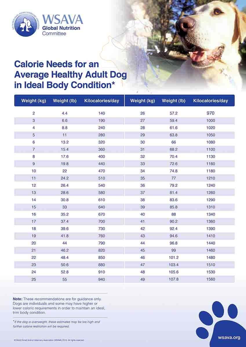 "Since 2014, AAFCO has required manufacturers to include a ""Calorie Content"" amount on their pet food labels. The accompanying charts from WSAVA can help you determine the quantity of the food you should be feeding your dog as well as the effectiveness of the food brand you are feeding. Couple the recommendations from this chart with the calories your dog food delivers in order to zero in on its recommended daily caloric needs. Then adjust as necessary with input from your vet, of course. Note: Make sure you check the dog's weight in ""pounds"" (middle column). (Photo/World Small Animals Veterinary Association)"