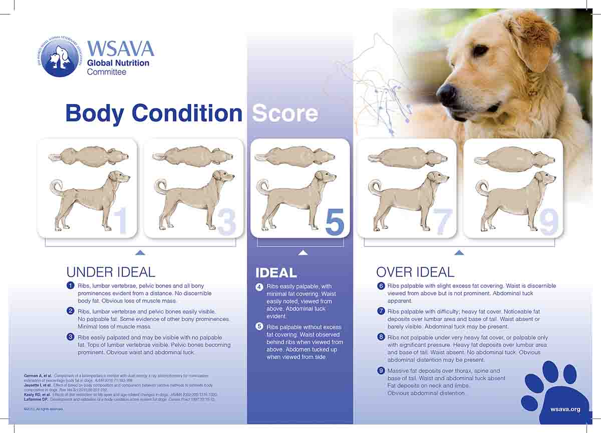 One way to determine if your dog is at a healthy weight is to do a quick check of its body condition. This chart will help you get started. You can view these and other charts on your computer: www.wsava.org Home > Global Guidelines > Global Nutrition Guidelines. (Photo/World Small Animals Veterinary Association)