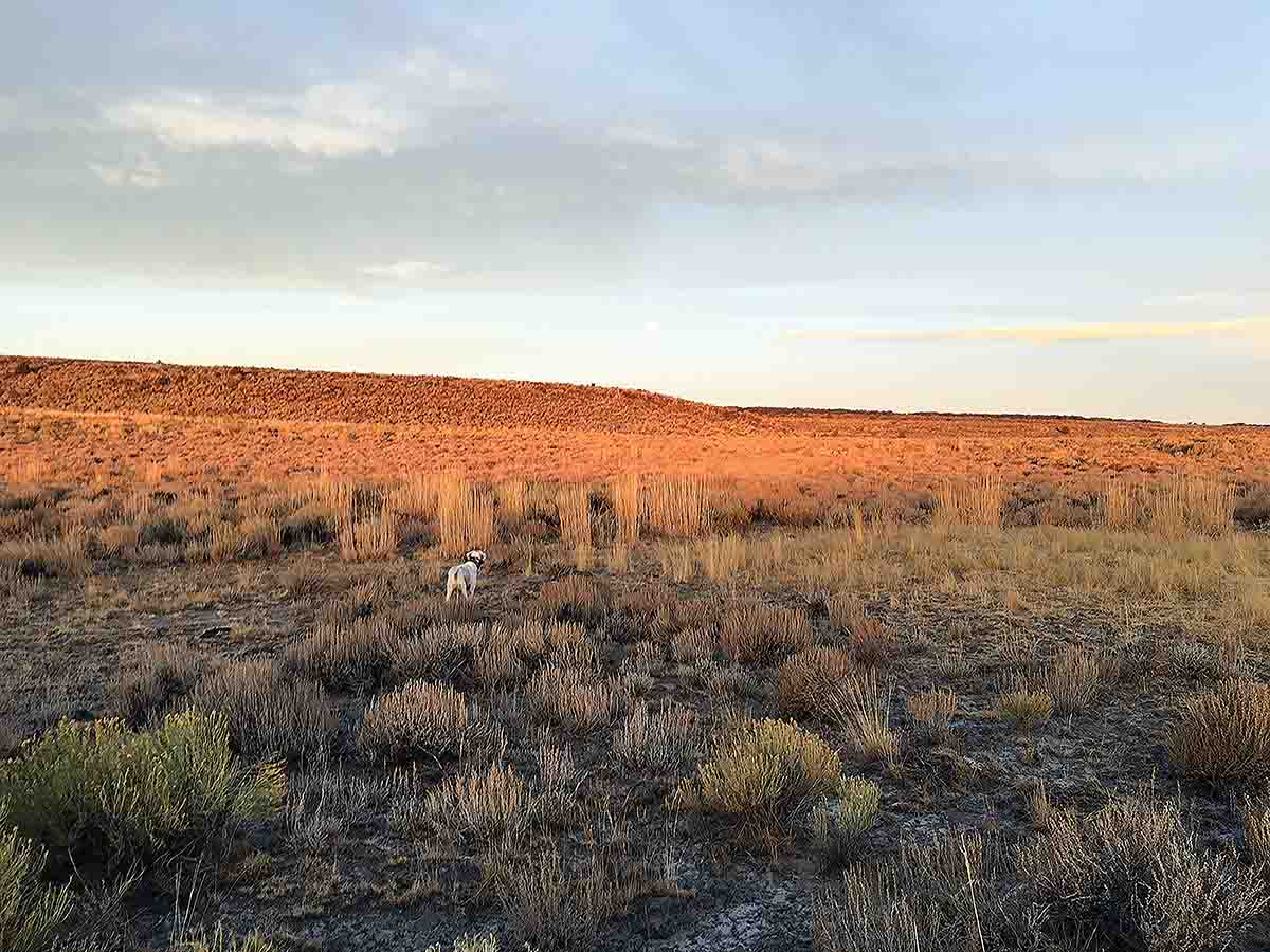 Miller locates sage grouse.