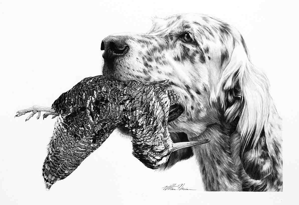 "Jack: Almost all of Harrison's drawings of hunting dogs depict the dog with a bird in its mouth. At least half of the time, they are based on a photo of a dog without a bird in its mouth, and Harrison uses his artistic license to add a bird after the fact. That is how the drawing titled ""Jack, an English Setter"" came to be shown with a woodcock in his mouth. ""The dog has such great character,"" says Harrison. Harvested birds in the mouths of dogs are a staple of Harrison's drawings because he believes such images resonate better with viewers, perhaps conjuring up memories of past hunts with their own dogs."