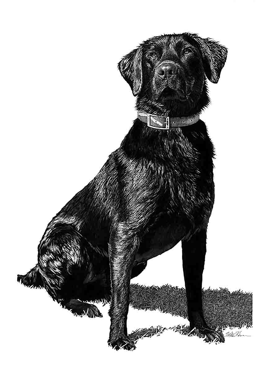 "Ty: ""A terrifically handsome Labrador retriever,"" is how Harrison describes the picture sent to him in response to a Facebook post. The original picture showed the dog lying on the lawn of someone's yard, just after he'd come out of the water. ""I loved the way the light played on his jet-black coat and the highlights. I also drew grass beneath him, but only in his shadow. This made the shadow an integral part of the pose."" Ty was also notable for what he lacked; specifically, a game bird in his mouth."