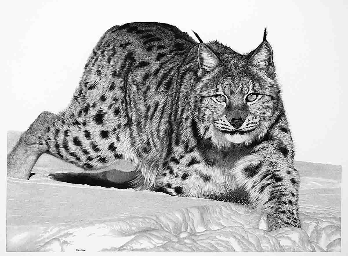 "Hunter in the Snow: ""Lynxes are one of the most beautiful animals,"" says Harrison. ""I love the way I was able to capture the snow in this piece. The funny thing about this piece is that it never sold. It sat in the gallery for three years until the gallery told me they didn't think there was a buyer for it."" However, his oldest son loved it, so Harrison gave it to him. ""It's hanging in his break room right now,"" says Harrison."