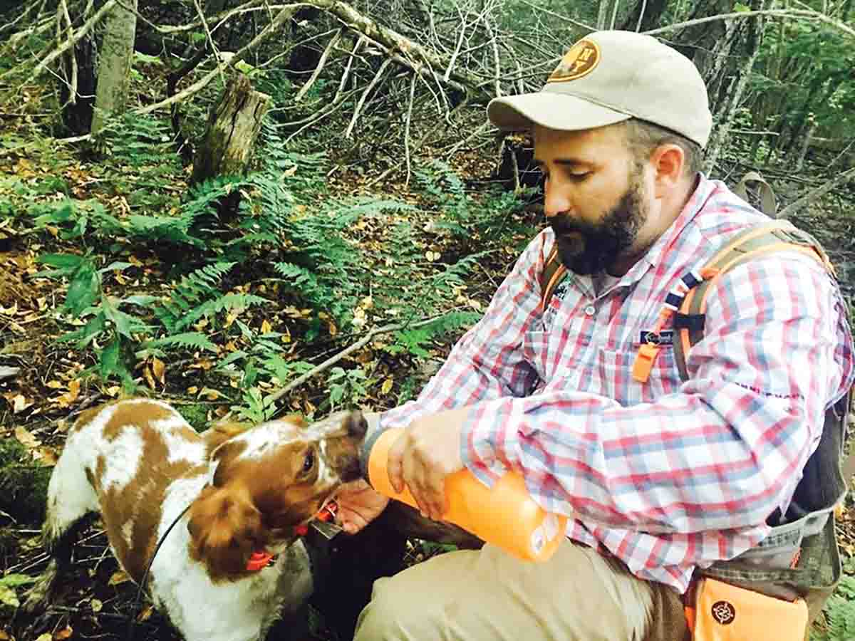 Guide Matt DeLorenzo refuels Louis the Brittany, his grouse and woodcock detector. (Photo/Conrad LaPierre)