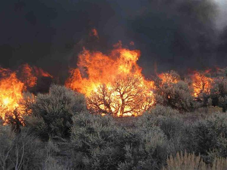 Sagebrush takes decades to recover after a burn, allowing nonnative cheat grass to take over and ruin the habitat for native game birds. This photo was taken in Oregon in 2006. (Photo/Scott Shaff, U.S. Geological Survey)