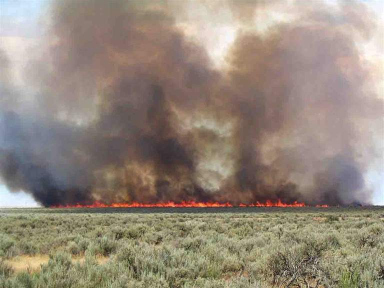 Fire in sagebrush, like this June 2010 burn in southern Idaho, and cheat grass growth afterwards are devastating on game birds. (Photo/Douglas J. Shinneman, U.S. Geological Survey)