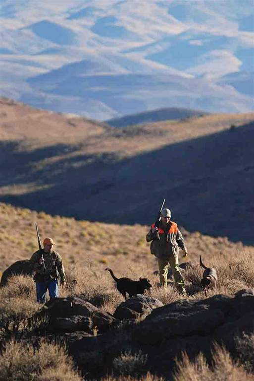 These two hunters are working through a rocky outcropping in Nevada with their Labradors looking for chukar in excellent sagebrush habitat. (Photo/Jim Matthews)