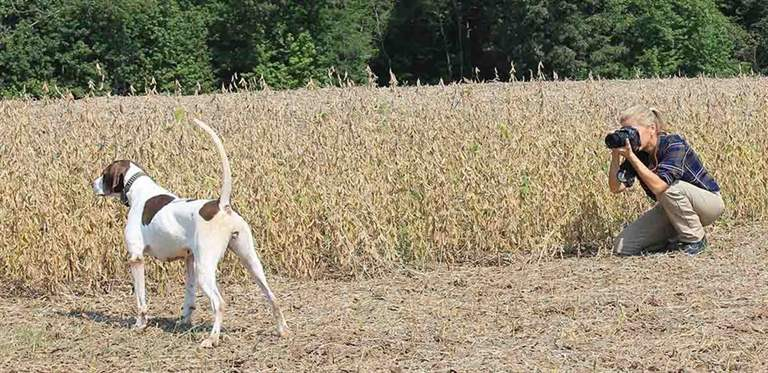 To capture the muscle movements and expressions, Brigham takes lots of photos of her English pointer Sue. (Photo/Ross Callaway)