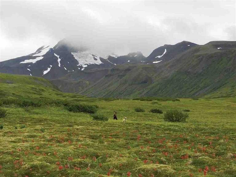 High elevation habitat for ptarmigan, like this meadow in Alaska, may be at risk if anticipated range shifts occur. (Photo/Andrew Bogan)