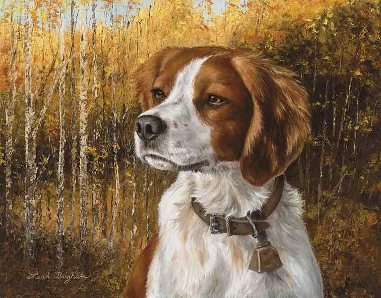 Brigham's contrast between detail and abstraction captures the intensity in the gaze of a Brittany. (Photo/Ross Callaway)